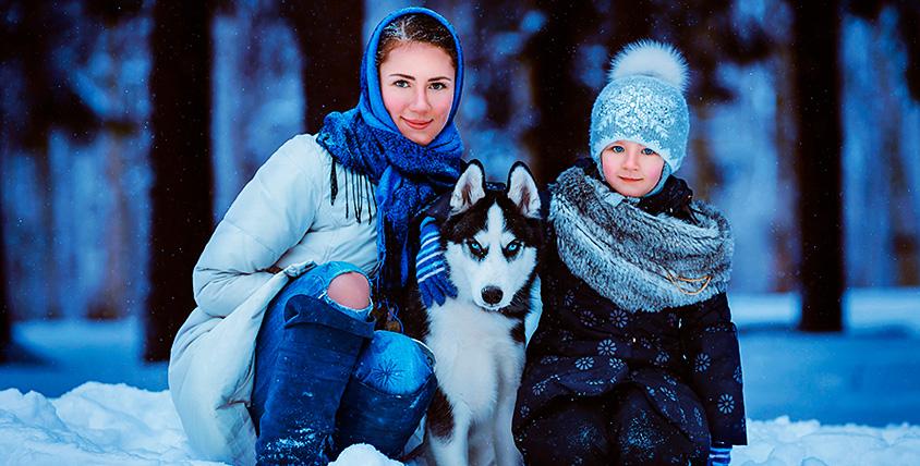 Фотосессия с хаски и катание на собачьей упряжке в питомнике Coldfire