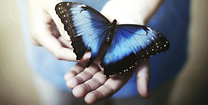 Прикоснитесь к порхающей экзотике! Билеты на выставку тропических бабочек и птичек в компании Troides