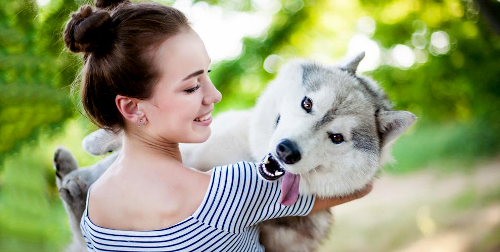 Экскурсия «Лето с хаски»: рассказы, общение с собаками и не только в СК «Бореалис»