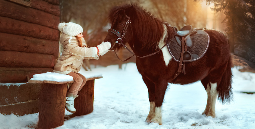 """Обучение катанию на пони, аренда и прогулочная фотосессия от компании """"Пони на дом"""""""