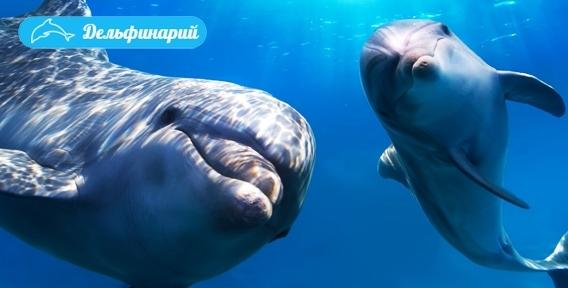 """Дельфинарий в Челябинске! Зажигательное шоу """"Черноморские дельфины из Мадагаскара"""". Море незабываемых впечатлений и океан эмоций!"""