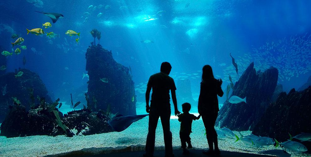 Интересная экскурсия для детей и взрослых в «Морской аквариум» на Чистых прудах