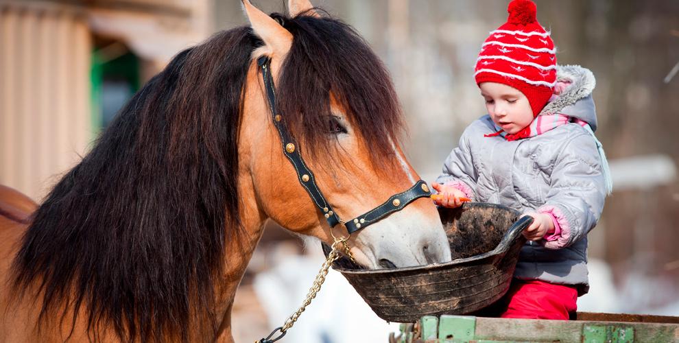 «Серебряное копытце»: конно-спортивный лагерь наозере Увильды икатание налошадях