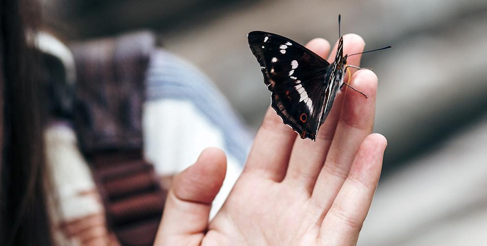 Билеты на контактную выставку «Живые тропические бабочки» для взрослых и детей