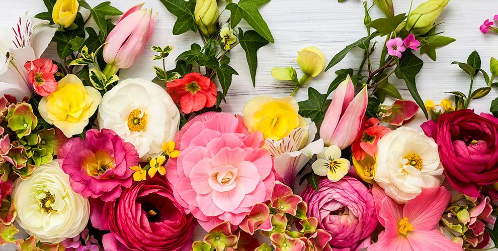Цветы, букеты, композиции от салона «Роза-Мимоза»