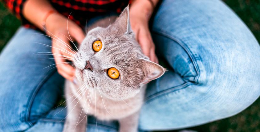 Посещения котокафе CatStory от 75 руб