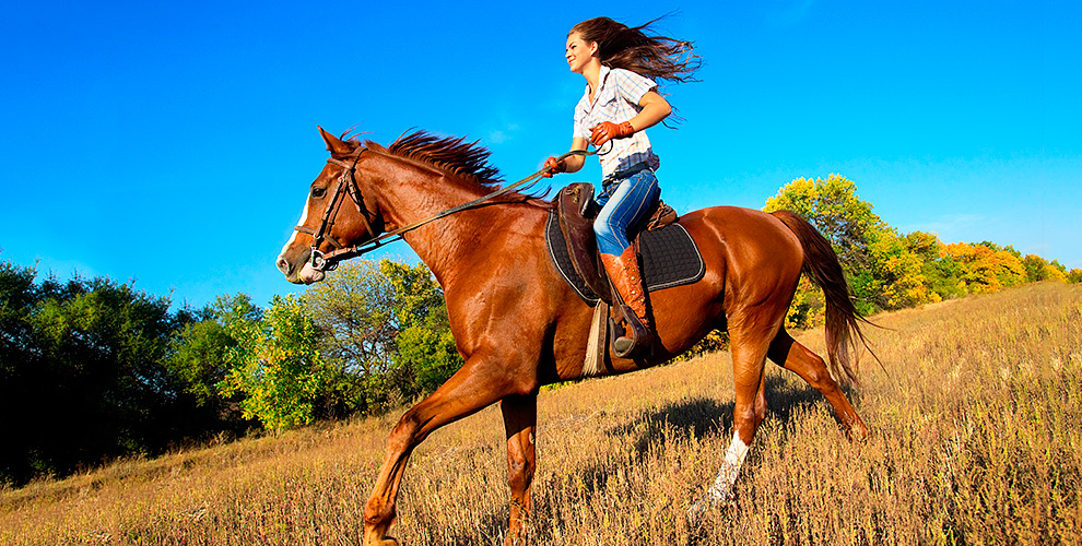 """Конные прогулки в будние и выходные дни от частной конюшни """"Эквилого"""""""
