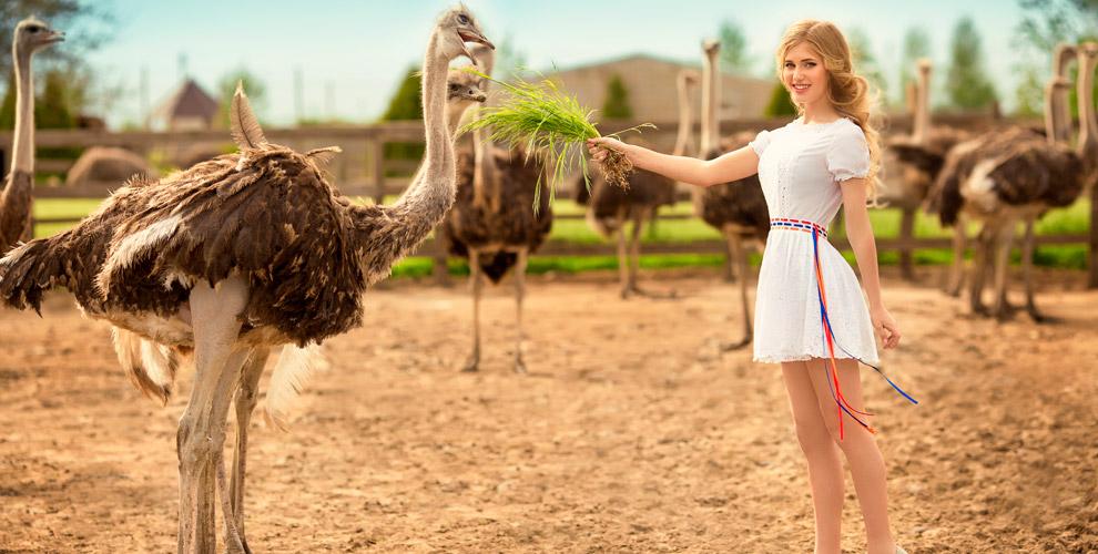 Посещение страусиной фермы иэкскурсия вЛПХ«Смоленское подворье»
