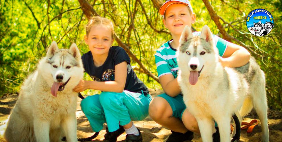 «Маламут-клуб»: экскурсия в питомник ездовых собак для детей и взрослых