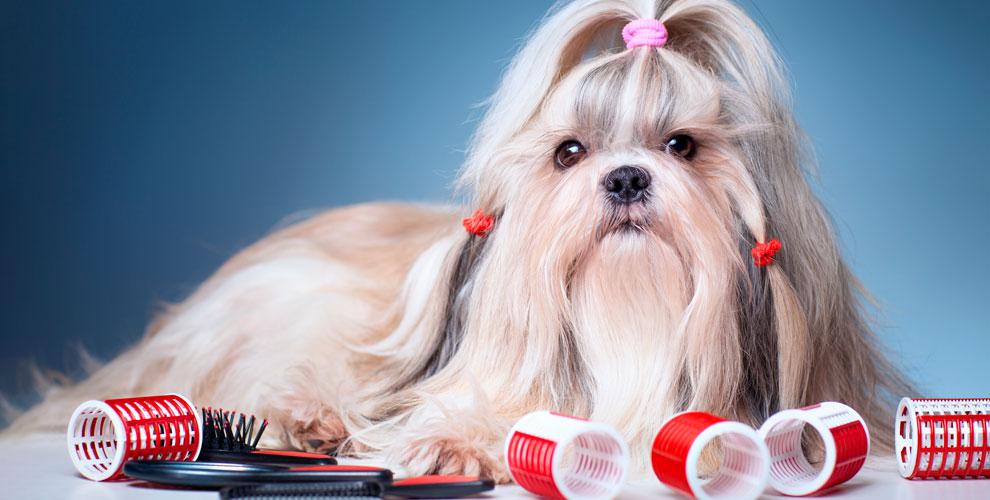 Стрижки для собак и кошек, наклейка антицарапок и другое в студии «Ваш Грумер»