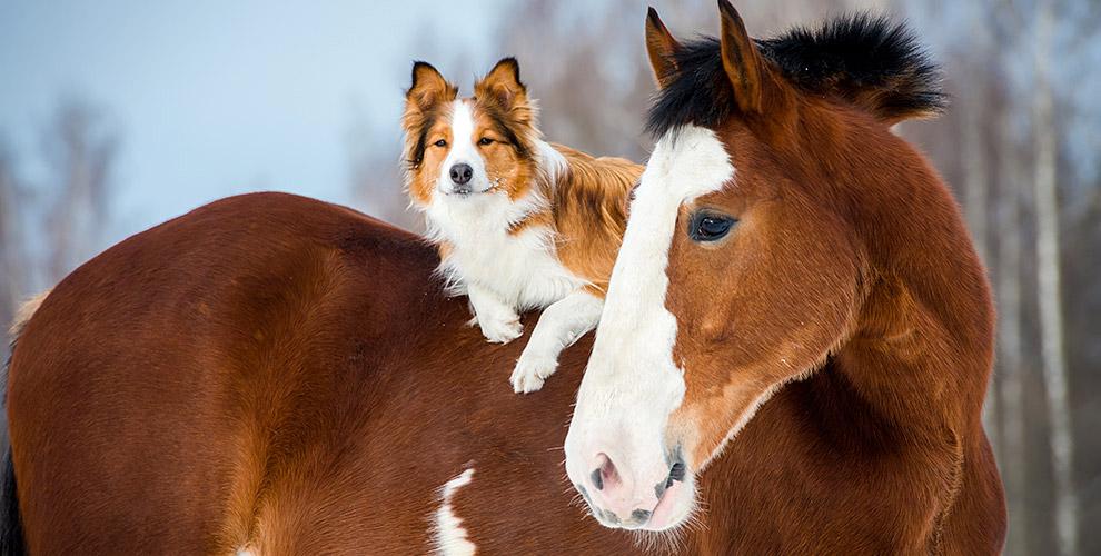 Русская деревня Шуваловка: конные прогулки, экскурсия и фотосессия с животными
