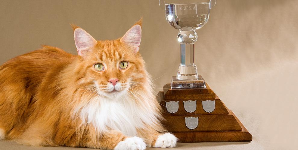 Посещение выставки кошек TRI-S Cat Club