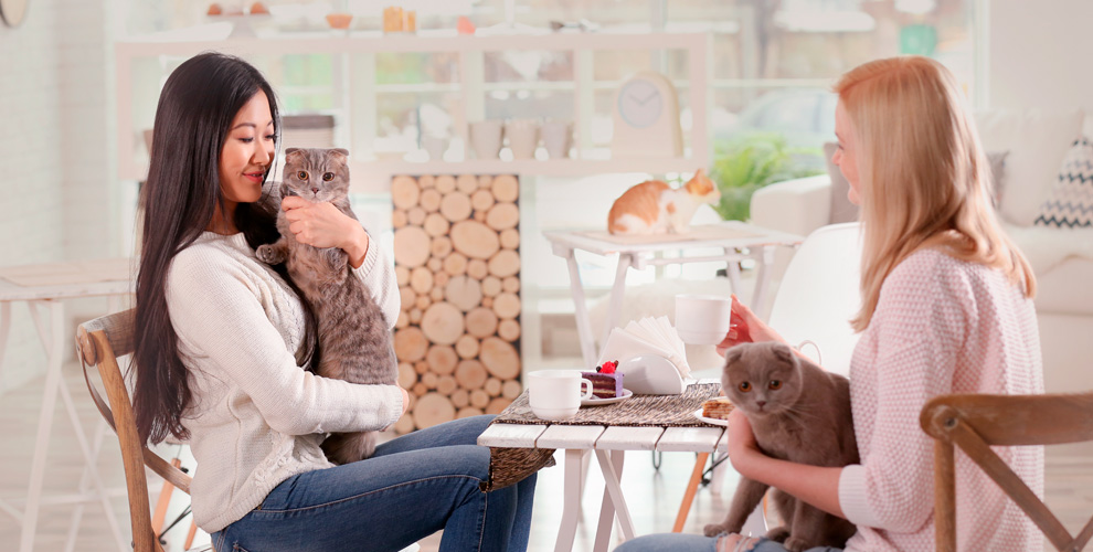 Котейня «ЧуКОТка»: общение с кошками, настольные игры, приставка