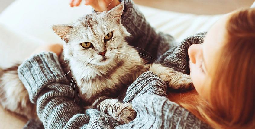 """Атмосфера домашнего уюта с вкусными угощениями, настольными играми и в окружении настоящих котиков в антикафе """"Дом с Котом"""""""